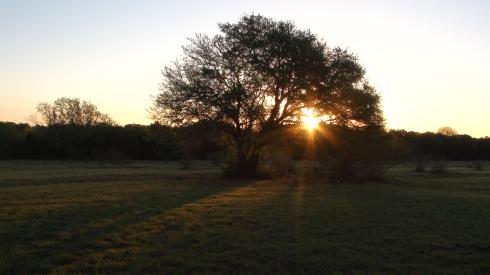 sunrise at CHR