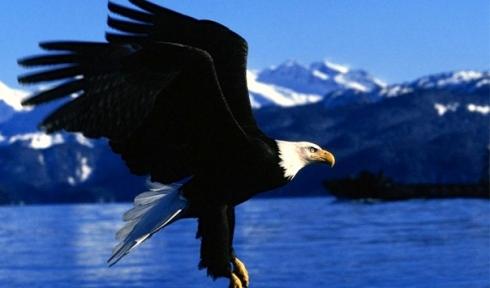 20090817185723010_Eagle Alaska